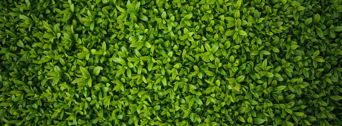 leaf-spring-leaves-plants